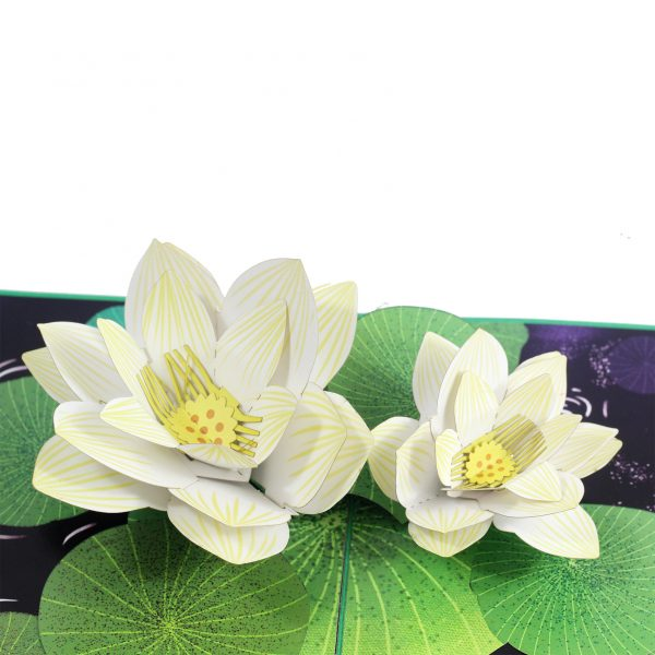 White Lotus Pop Up Card